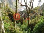智利拉各斯蒙特港的土地,Isla Guafo,编号33694132