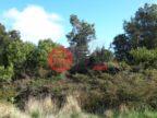 智利拉各斯蒙特港的土地,El Maqui Parcelacion Los Arrayanes,编号38266476