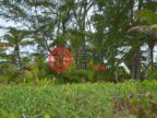 洪都拉斯海湾群岛Roatán的房产,Upper Long Cay: Lot 10 Cayos Cochinos,编号48380285