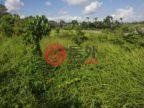 印尼巴厘岛Canggu的土地,编号51303037